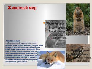 Животный мир Лесостепь не имеет особых животных. В здешних лесах как и в со