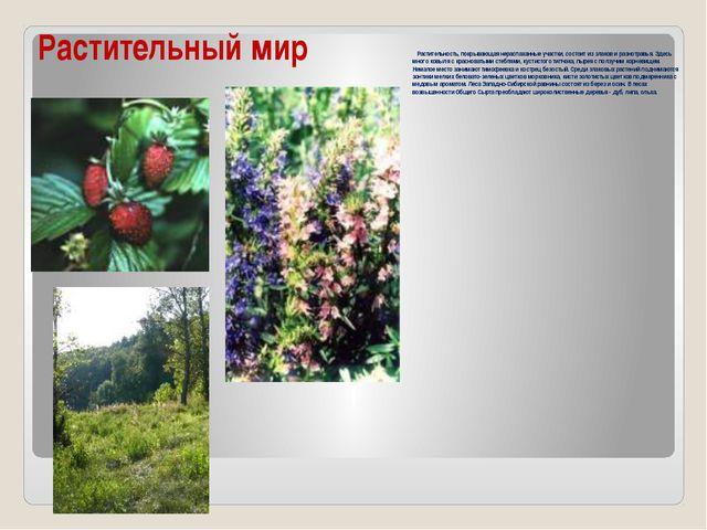 Растительный мир Растительность, покрывающая нераспаханные участки, состоит и...
