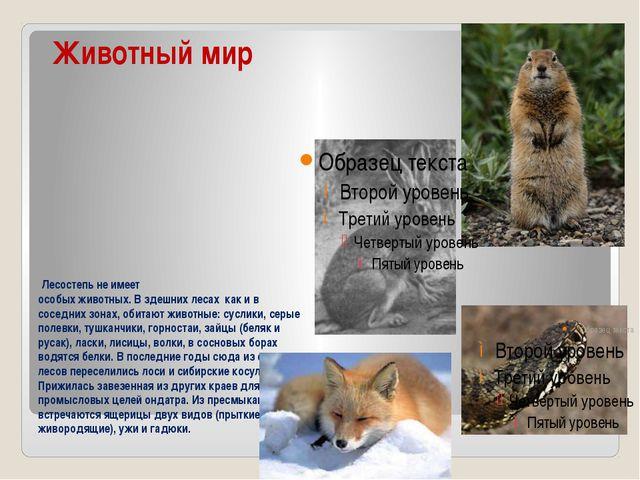 Животный мир Лесостепь не имеет особых животных. В здешних лесах как и в со...