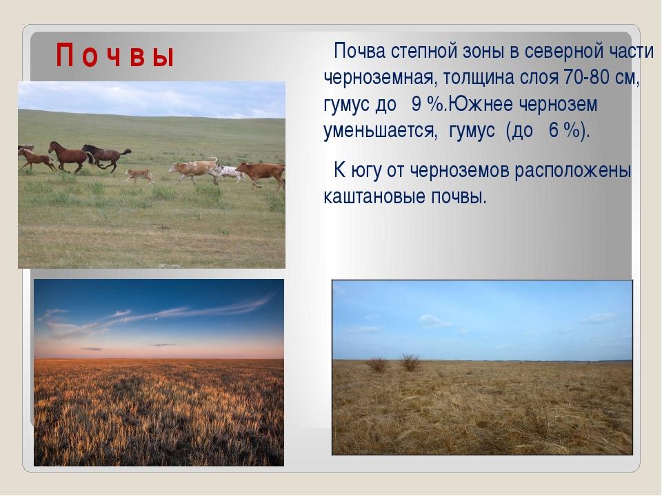 П о ч в ы Почва степной зоны в северной части черноземная, толщина слоя 70-8...