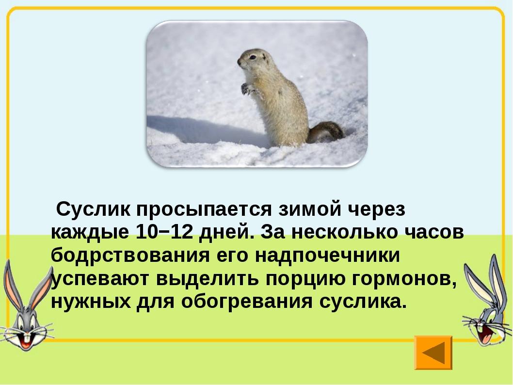 Суслик просыпается зимой через каждые 10−12 дней. За несколько часов бодрств...