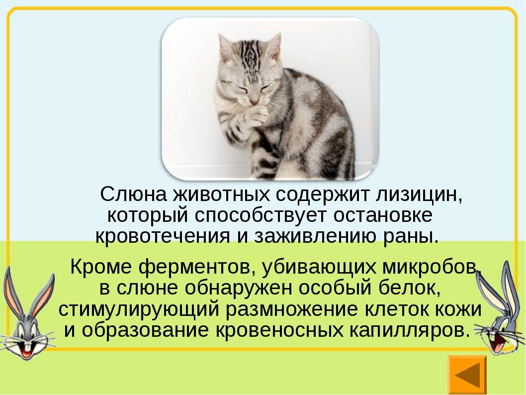 Слюна животных содержит лизицин, который способствует остановке кровотечения...