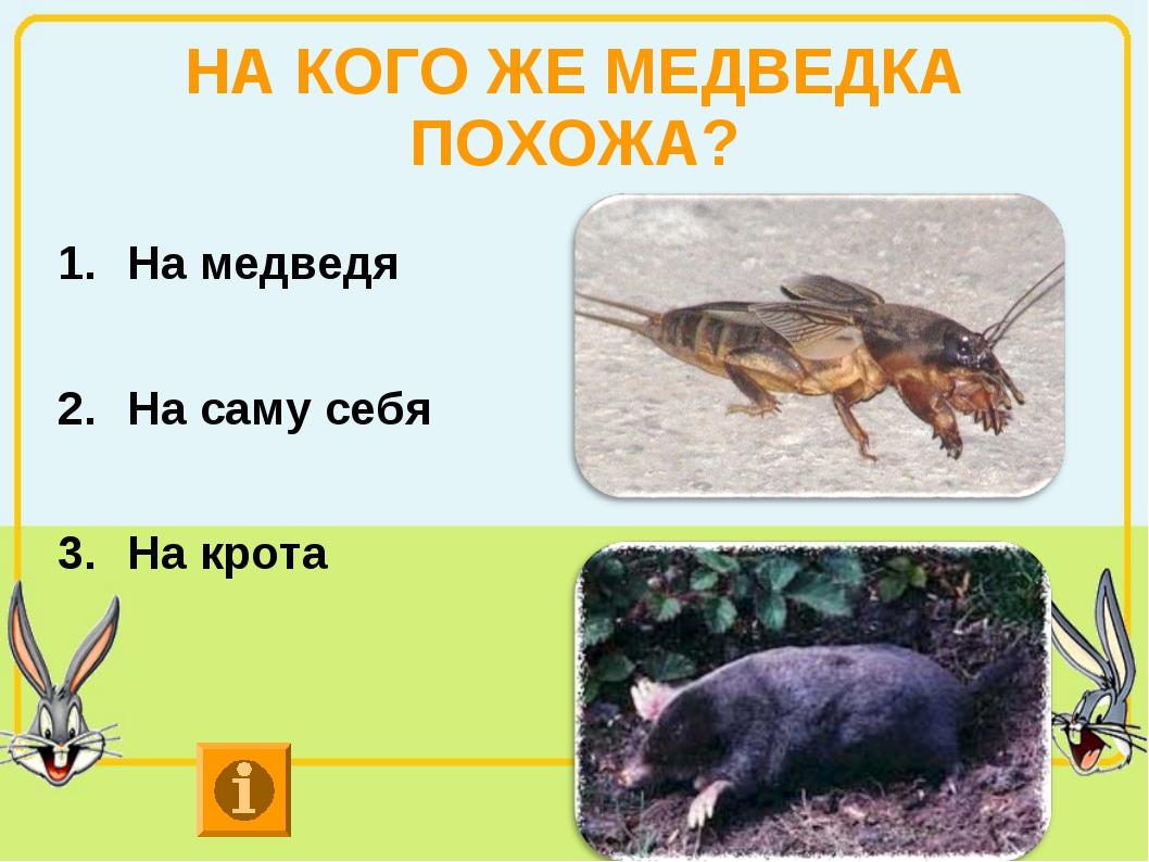 НА КОГО ЖЕ МЕДВЕДКА ПОХОЖА? На медведя На саму себя На крота
