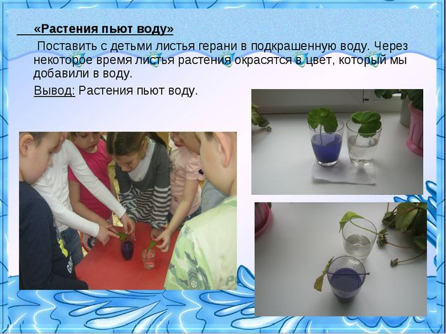 «Растения пьют воду» Поставить с детьми листья герани в подкрашенную воду. Ч...