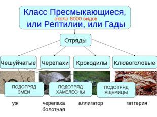 Класс Пресмыкающиеся, или Рептилии, или Гады около 8000 видов Чешуйчатые Чере
