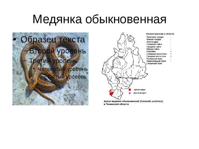 Медянка обыкновенная