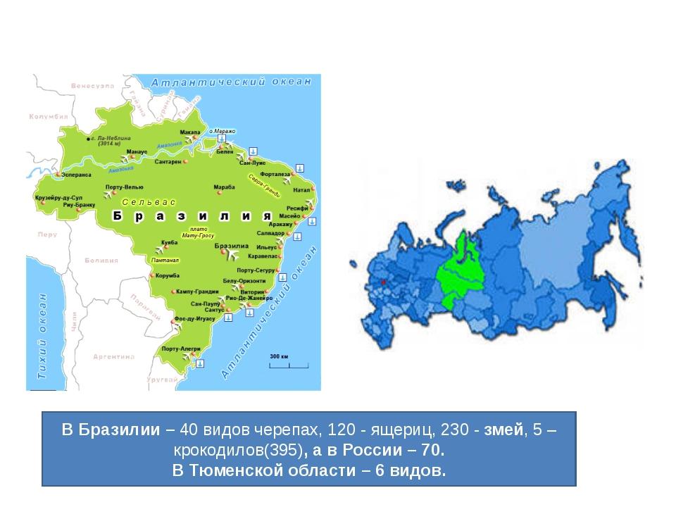 В Бразилии – 40 видов черепах, 120 - ящериц,230 -змей, 5 – крокодилов(395),...