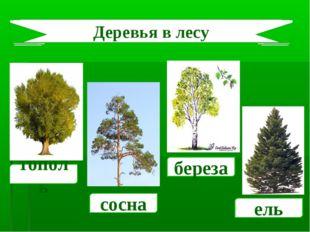 тополь сосна береза ель Деревья в лесу