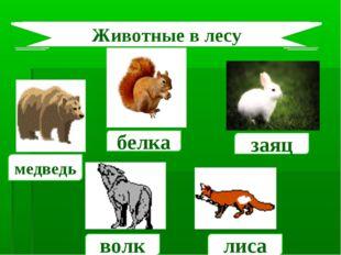 медведь волк белка лиса Животные в лесу заяц