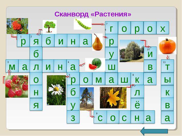 Сканворд «Растения» 1 2 3 4 5 6 7 8 9 10 11