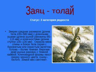 Зверек средних размеров (длина тела 430–580 мм) с длинными ушами (длина ушной