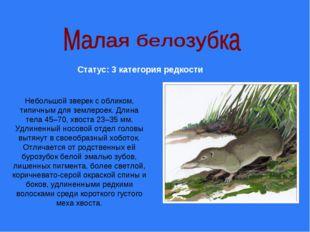 Небольшой зверек с обликом, типичным для землероек. Длина тела 45–70, хвоста