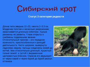 Статус:3 категория редкости Длина тела зверька 12–23, хвоста 2–3,3 см. Мордоч