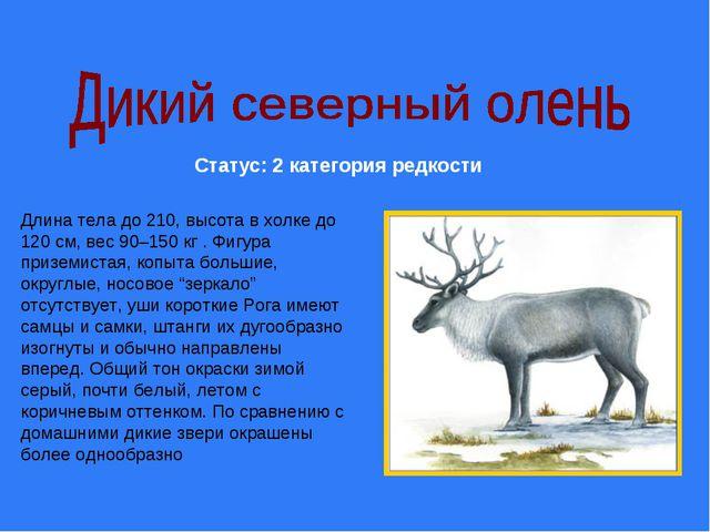 Статус: 2 категория редкости Длина тела до 210, высота в холке до 120 см, вес...