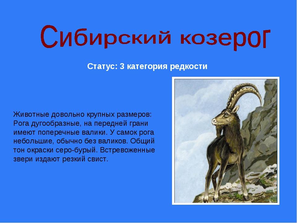 Статус: 3 категория редкости Животные довольно крупных размеров: Рога дугообр...