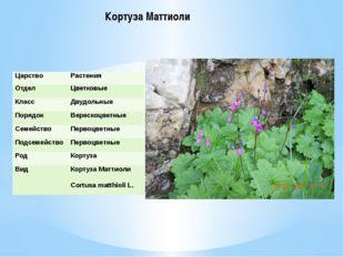 Кортуза Маттиоли Царство Растения Отдел Цветковые Класс Двудольные Порядок Ве