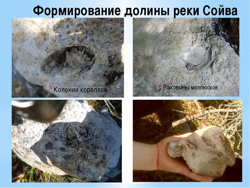 Колонии кораллов Формирование долины реки Сойва Раковины моллюсков