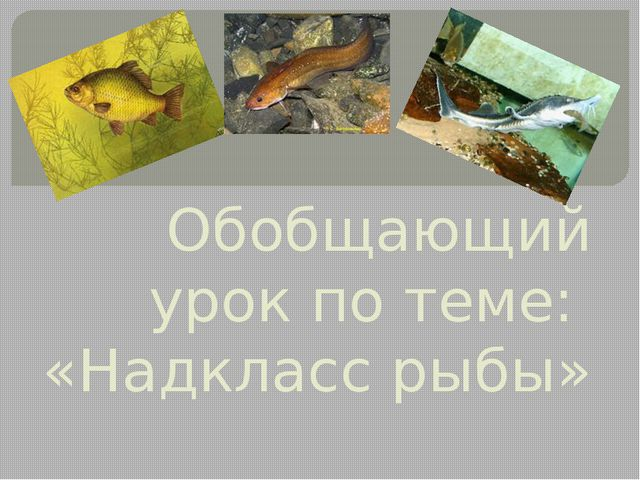 Обобщающий урок по теме: «Надкласс рыбы»