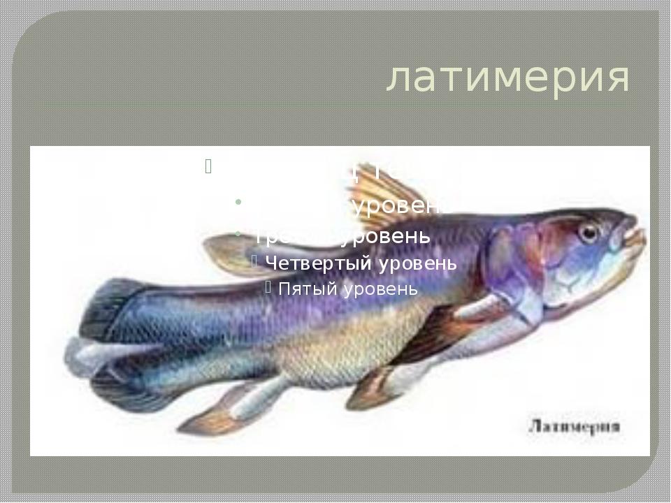 латимерия