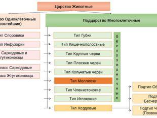 Подцарство Одноклеточные (Простейшие) Подцарство Многоклеточные Тип Саркодовы