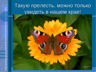 Такую прелесть, можно только увидеть в нашем крае!