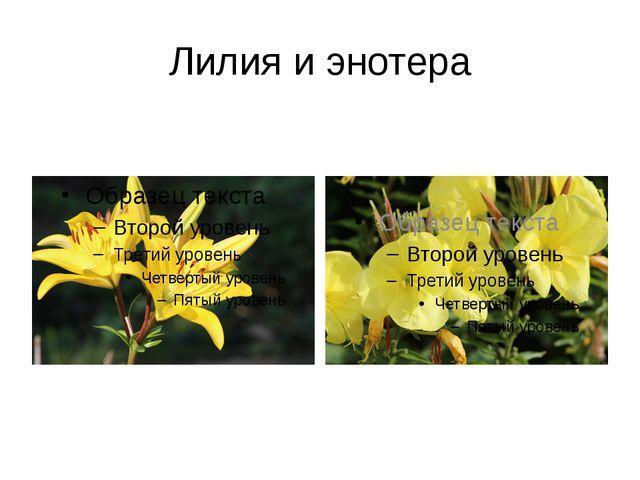 Лилия и энотера