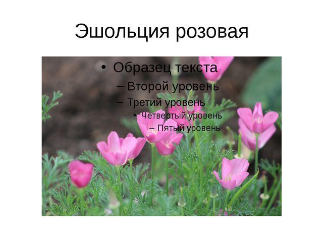 Эшольция розовая