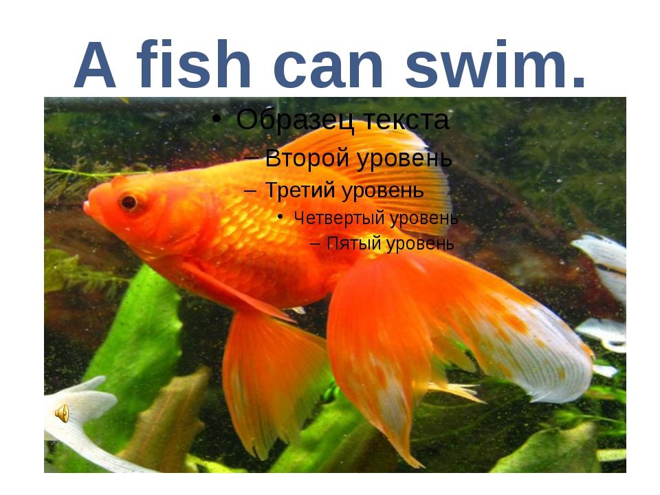 A fish can swim.