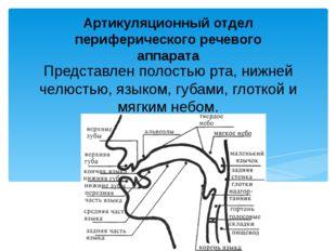 Представлен полостью pтa, нижнeй челюстью, языком, губами, глоткой и мягким н