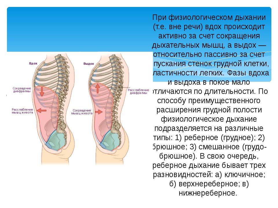 При физиологическом дыхании (т.е. вне речи) вдох происходит активно за счет с...