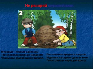 Не разоряй муравейники Муравьи – лесные санитары; Так прозвали люди их недаро