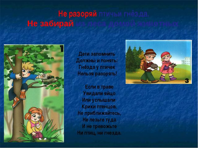 Не разоряй птичьи гнёзда, Не забирай из леса домой животных Дети запомнить Д...