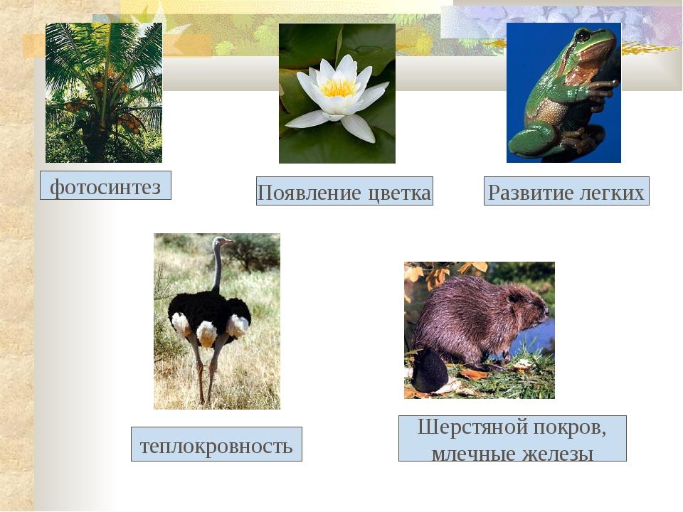 фотосинтез Появление цветка Развитие легких теплокровность Шерстяной покров,...