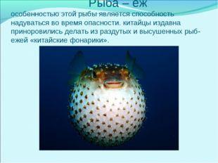 Рыба – еж особенностью этой рыбы является способность надуваться во время оп