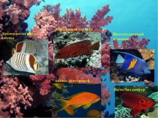 Коралловые рыбки Краснохвостая рыба-бабочка Коралловая гаруппа Желтополосатый