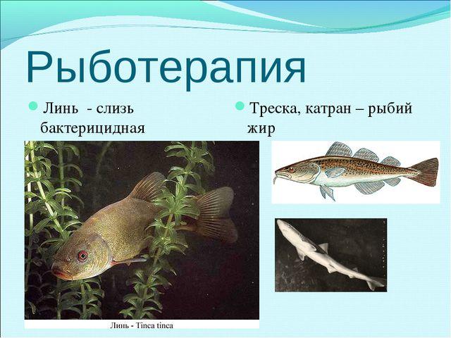 Рыботерапия Линь - слизь бактерицидная Треска, катран – рыбий жир