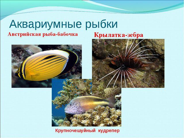 Аквариумные рыбки Австрийская рыба-бабочка Крылатка-зебра Крупночешуйный кудр...