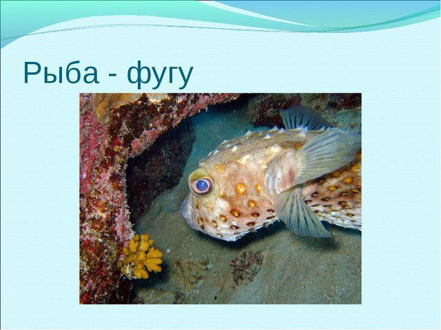 Рыба - фугу