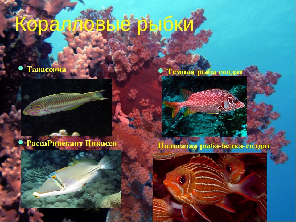 Коралловые рыбки Талассома РассаРинекант Пикассо Темная рыба солдат Полосатая...