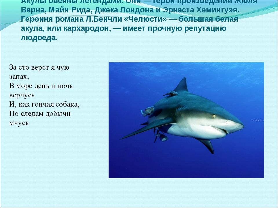 Акулы овеяны легендами. Они — герои произведений Жюля Верна, Майн Рида, Джек...