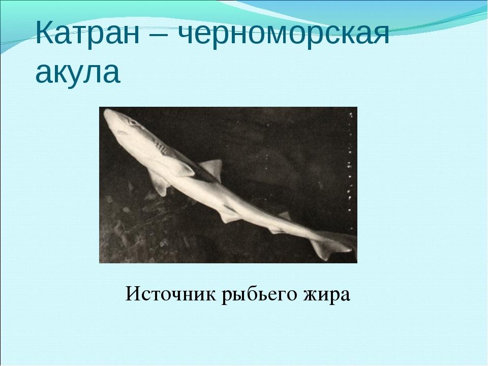 Катран – черноморская акула Источник рыбьего жира