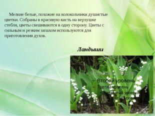 Ландыши Мелкие белые, похожие на колокольчики душистые цветки. Собраны в крас
