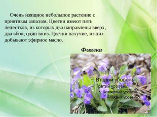 Фиалка Очень изящное небольшое растение с приятным запахом. Цветки имеют пять