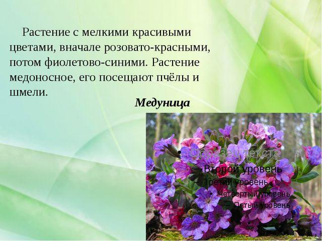 Медуница Растение с мелкими красивыми цветами, вначале розовато-красными, пот...