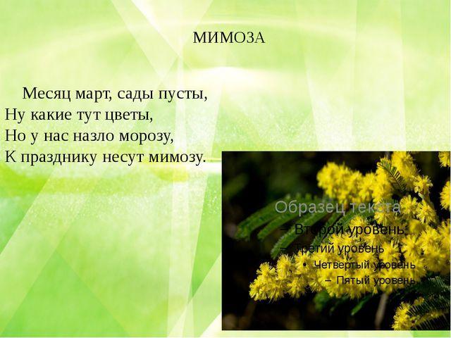 МИМОЗА Месяц март, сады пусты, Ну какие тут цветы, Но у нас назло морозу, К п...