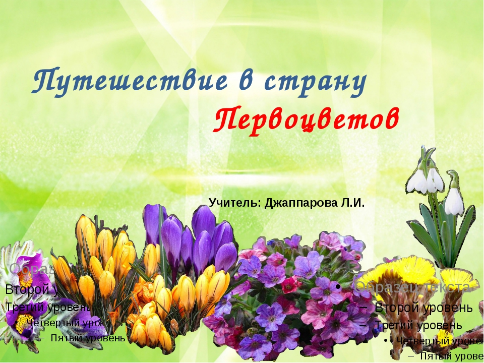 Путешествие в страну Первоцветов Учитель: Джаппарова Л.И.
