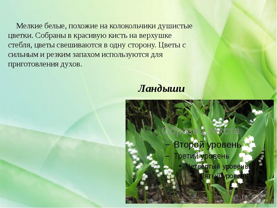 Ландыши Мелкие белые, похожие на колокольчики душистые цветки. Собраны в крас...