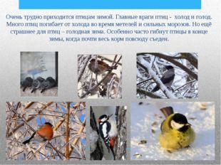 Очень трудно приходится птицам зимой. Главные враги птиц - холод и голод. Мн
