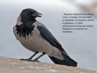 Носит серенький жилет, Но у крыльев – черный цвет. Видишь, кружат двадцать п