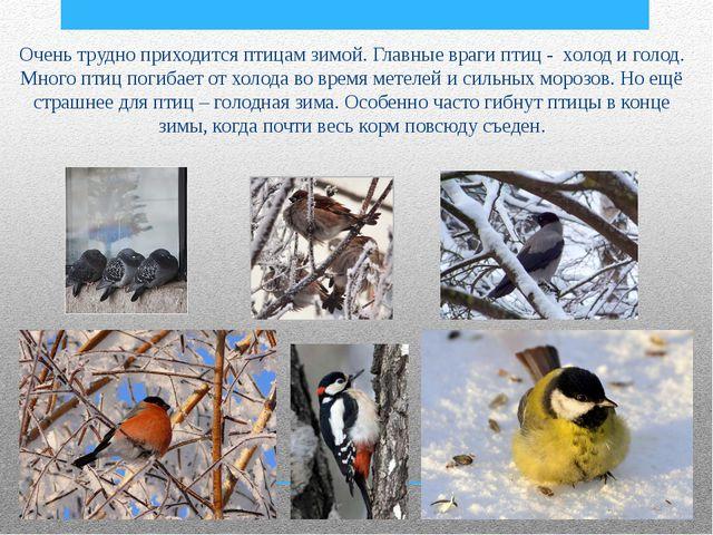 Очень трудно приходится птицам зимой. Главные враги птиц - холод и голод. Мн...
